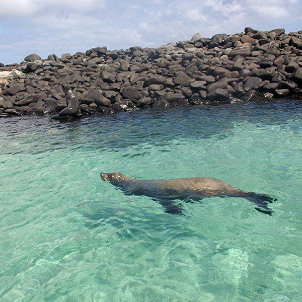 Galápagos Island Hopping